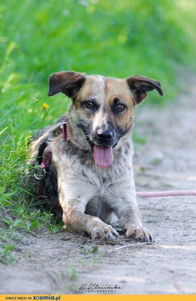 Luna, delikatna, przyjazna psia przylepka szuka domu!