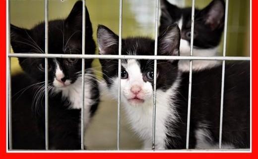 PILNE Schroniskowe kocięta o różnym umaszczeniu bardzo potrzebują domów   śląskie Katowice