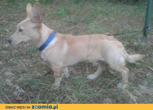 Znaleziono psa,  mazowieckie Otwock
