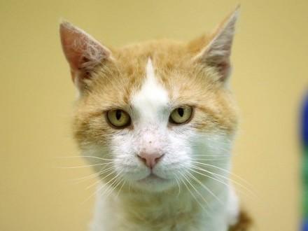 Rudy koci trójłapek szuka domu!
