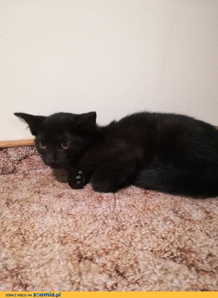 Mała kotka Czernuszka szuka domu