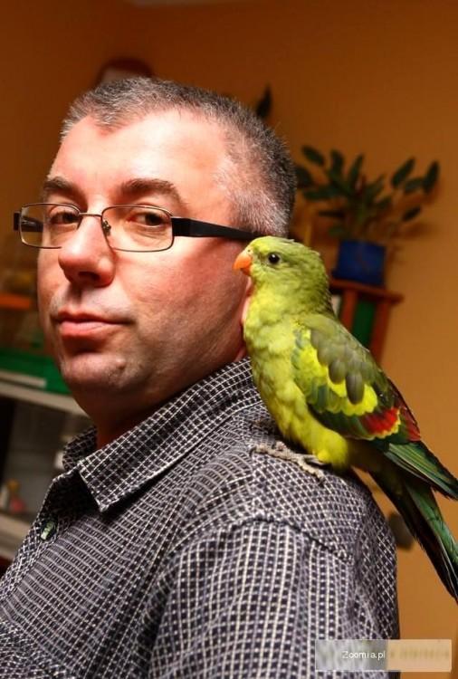 papugi oswojone-ręcznie karmione