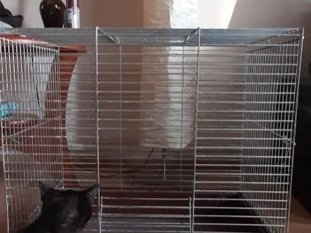 Oddam klatke dla gryzoni za zabaweczle dla kotka :)