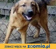 Maciuś vel Laluś nr 1  kochany psiak czeka na Ciebie ,  mazowieckie Warszawa