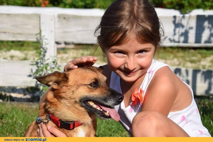 LISIA mała piękna sunia lubiąca dzieci szuka kochającego domku