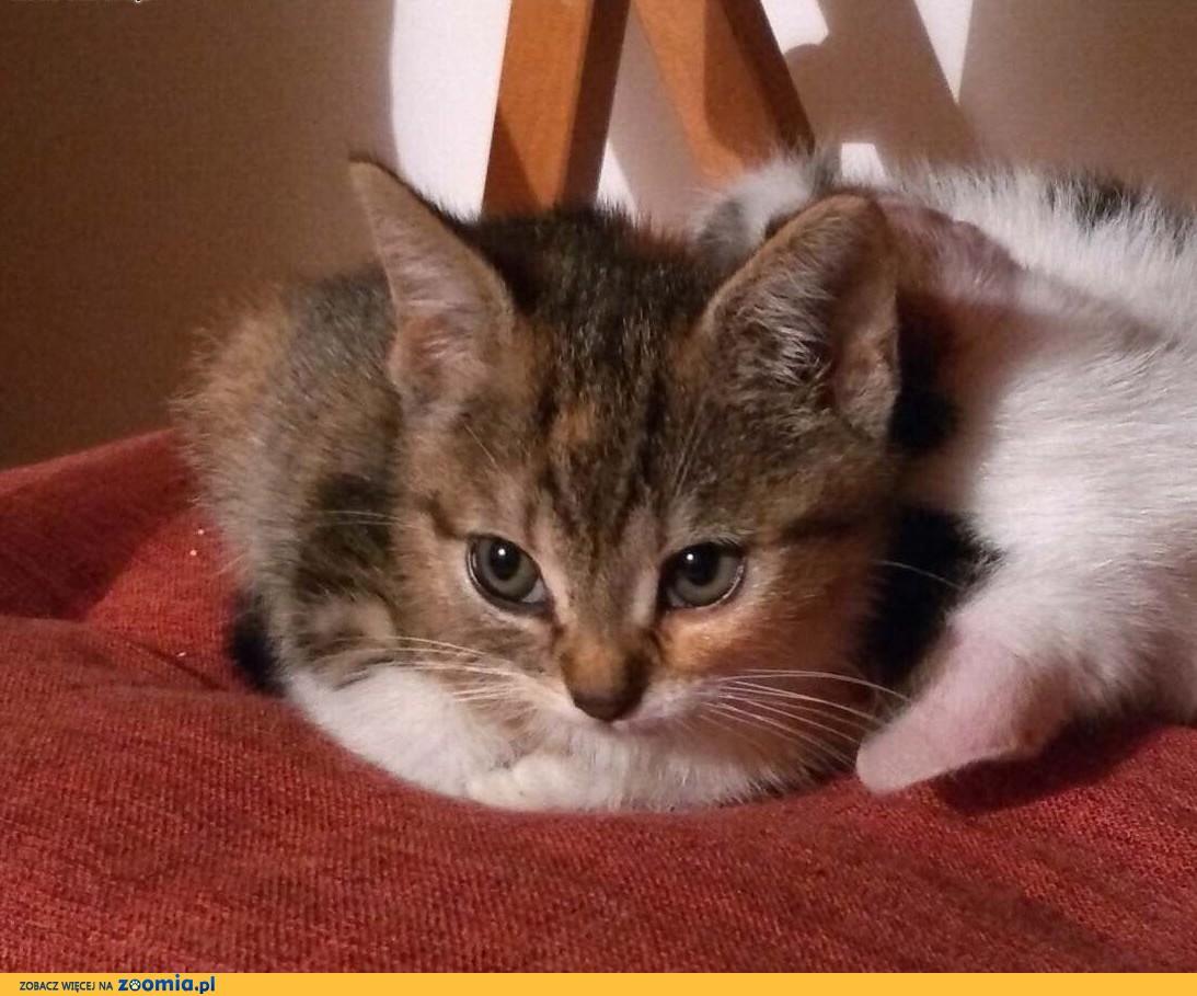 Malutka Baby do adopcji,  śląskie Gliwice
