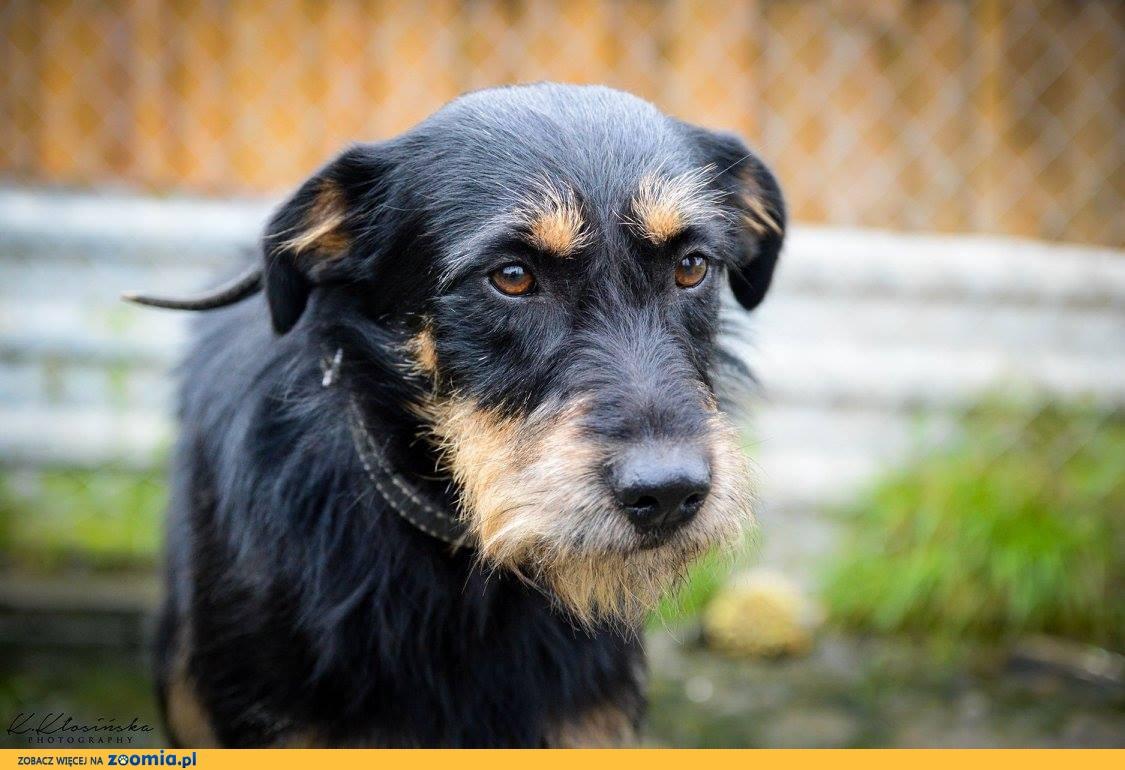 Tonic, niekonfliktowy, przepiękny pies szuka kochającego domu!