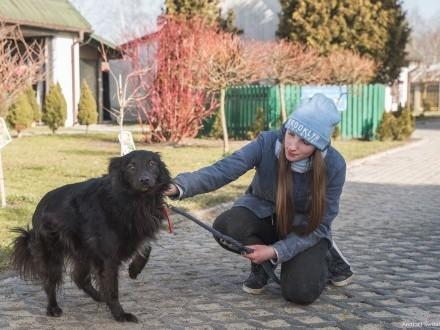 Bercik-pozytywny pies  w typie rasy szwedzki Lapphund!