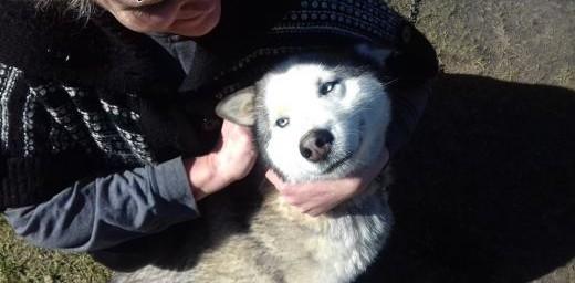 Sunia husky i jej syn szukają domu!   Kundelki cała Polska