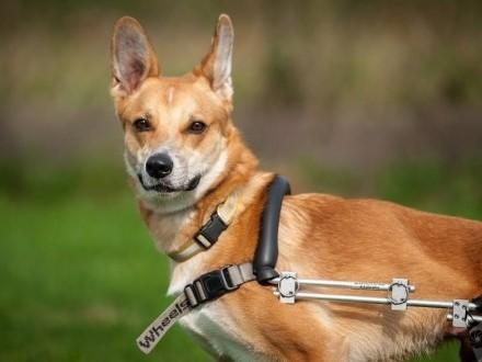 TOFFIK-mokry nosek  kółka dwa - adoptuj super psa!