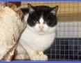 Megan, młoda kotka z pazurem szuka domu!