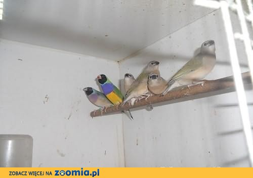 ptaki klatki