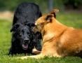 Czarny FUKS jest młody, zgrabny, mądry, piękny i powabny! ;-)