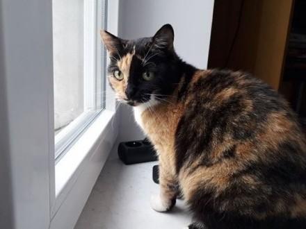 Helenka czeka na dom