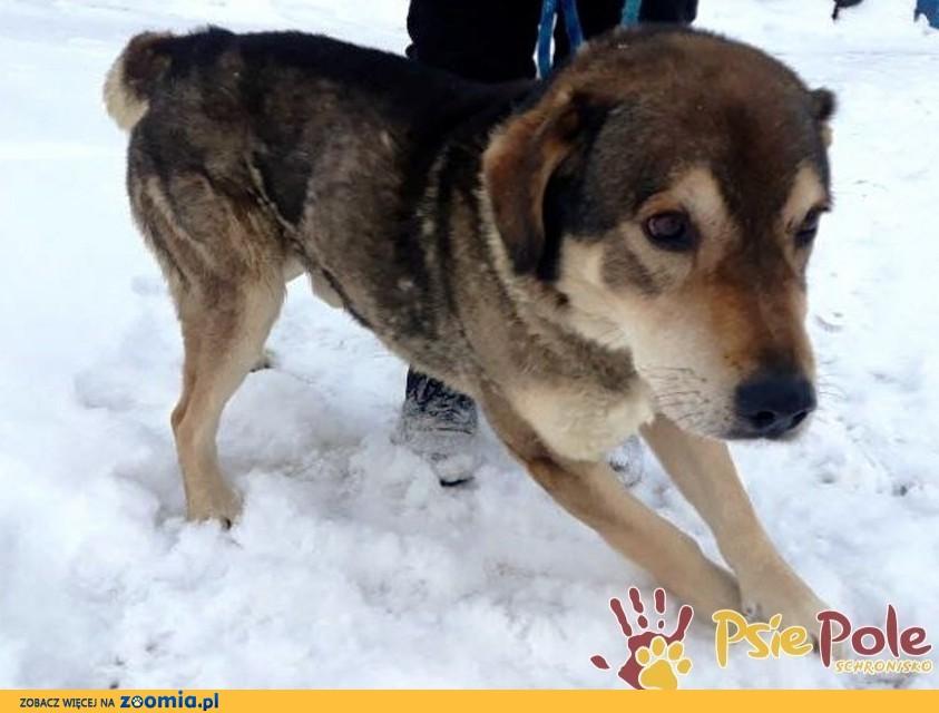 BIGI-wesoły, radosny, energiczny psiak szuka aktywnego domu, adopcja