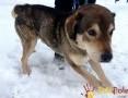 'BIGI-wesoły, radosny, energiczny psiak szuka aktywnego domu, adopcja