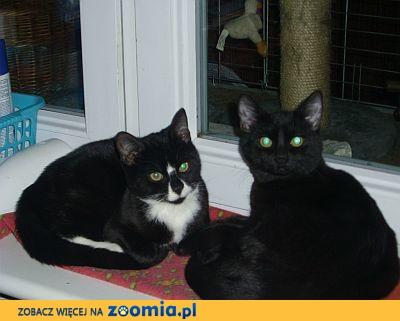 Uwaga koty na zimowe mrozy!!!