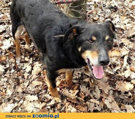 FOREST - kochany psiak, porzucony w lesie szuka domu..ADOPTUJ,  mazowieckie Warszawa