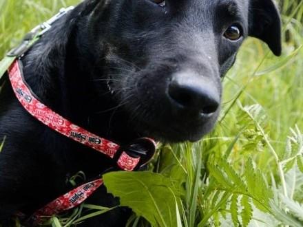 Bambo  młody  przyjazny psiak  wspaniały towarzysz szuka domu!