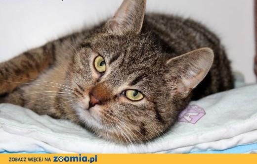 Młodziutka kotka Binia szuka domu!,  dolnośląskie Wrocław