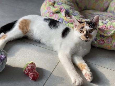 Kociaki cudne Gina i Gio szukają kochających domów!