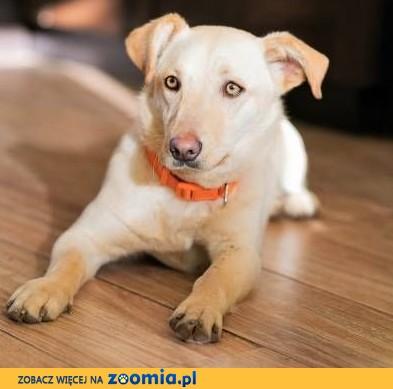 PUNIA - 8 miesięczna sunia, która kocha psy, koty, ludzi szuka domu
