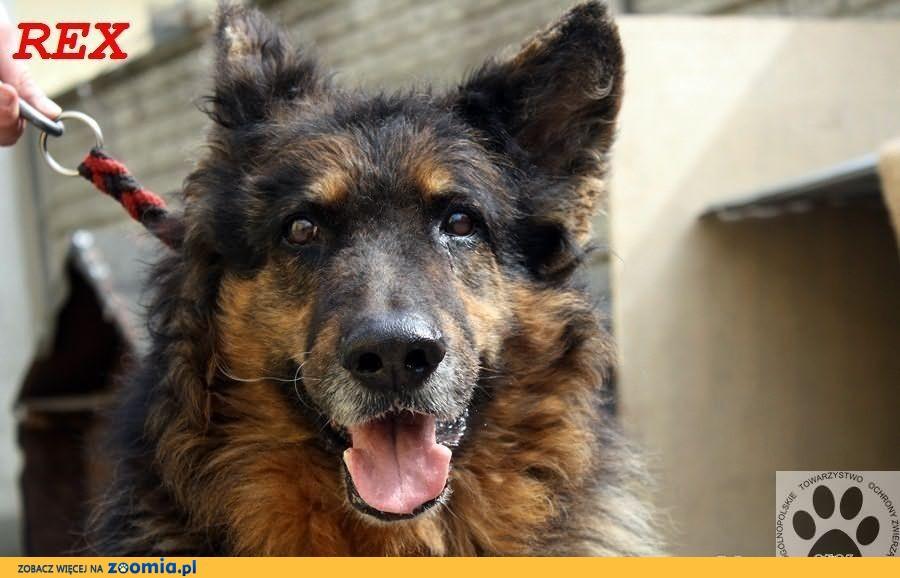 Niezwykle kochany staruszek pies Rex wypatruje swojego bohatera