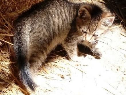 kotki do adopcji   małopolskie Myślenice