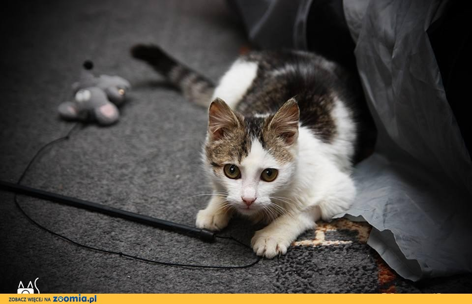Mały Bąbel czeka na dom :)