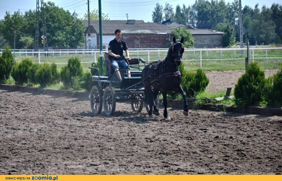 Zajeżdzanie Koni i Kucy