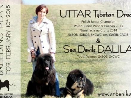 mastif tybetański - MAMY SZCZENIAKI!