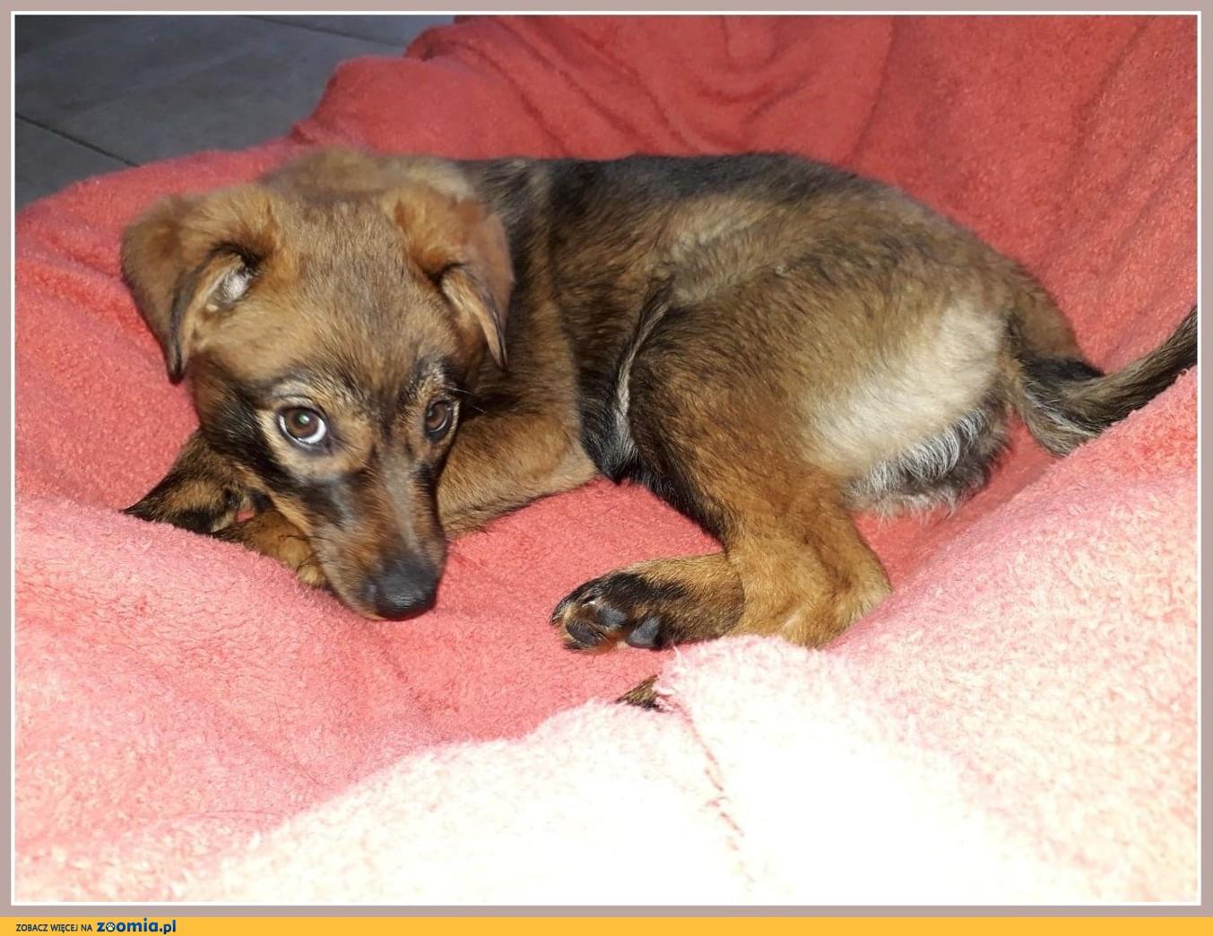 Przesympatyczna suczka RUDZIA,szczeniak 3 m-ce,mądra,grzeczna,łagodna,zaszczepiona.Adopcja.