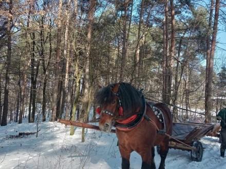 Konie zimnokrwiste stanówka