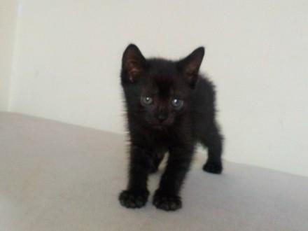 Mały kociak Irys szuka domu