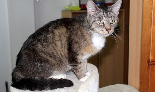 Spokojna miziasta kotka Bursa   dolnośląskie Wrocław