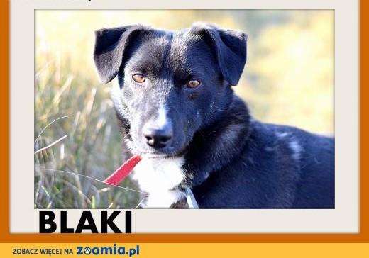 BLAKI,11kg,rodzinny,towarzyski,łagodny pies.ADOPCJA,  dolnośląskie Wrocław