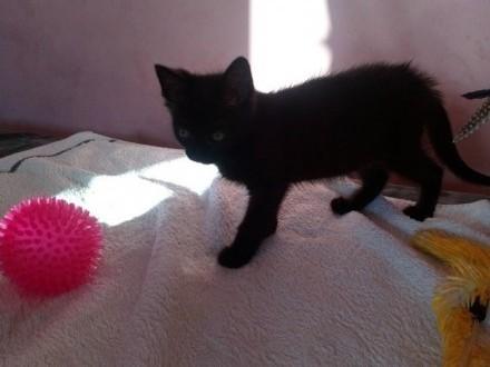 Mała kotka Agatka szuka domu