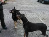 Parkingowe psiaki pilnie szukają domów!
