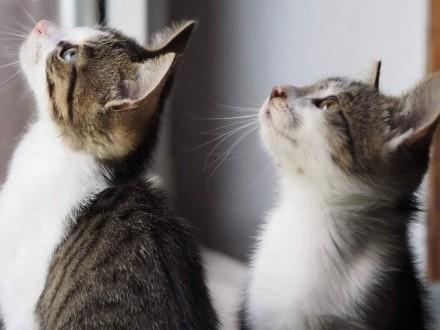 3-miesięczny kot i kotka do adopcji!   śląskie Częstochowa