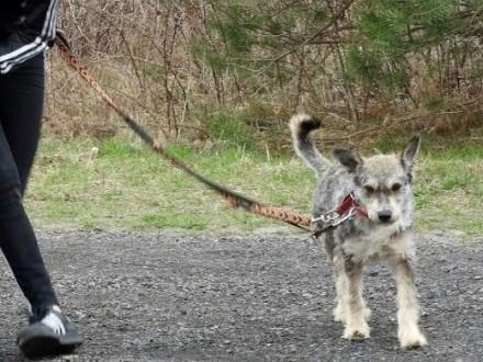 DOLAR - przyjacielski  nieduży psiak   małopolskie Wieliczka