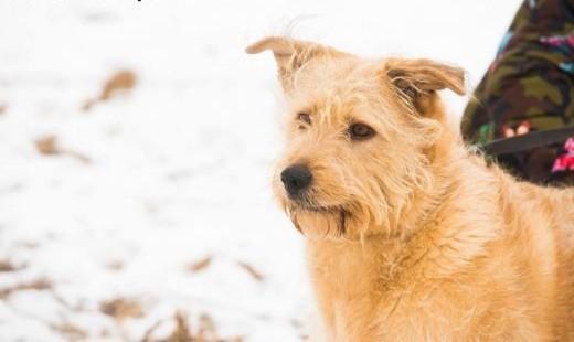 Bill  bezkonfliktowy  spokojny psiak szuka domu!   Kundelki cała Polska