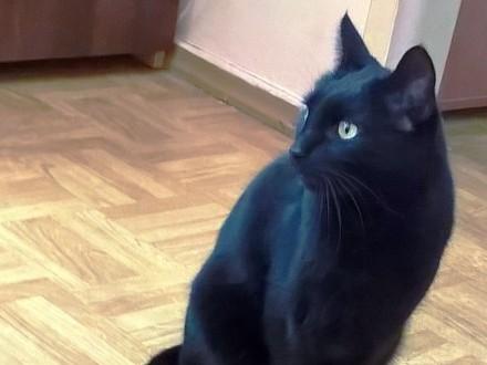 Zaginął kot BANDZIOR