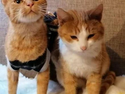 ELZA cudna młoda ruda kotka szuka domu