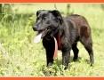 2 letni, średni 23 kg,łagodny, sympatyczny wesoły psiak BALU_Adopcja