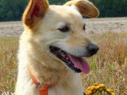 Ebi wspaniała sunia od szczeniaka mieszka w schronisku adoptuj ją   Kundelki cała Polska