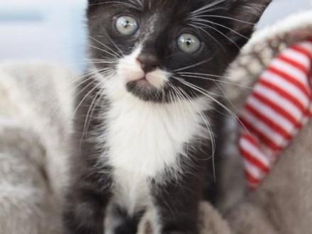 OTOZ Animals Dąbrówka - Kto pokocha małego Elbo ?