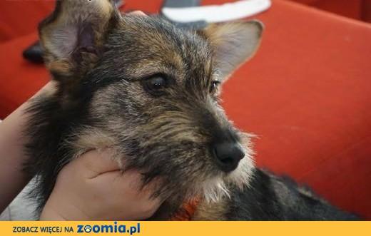 Elcia- psi dzieciuch szuka domu :),  mazowieckie Warszawa
