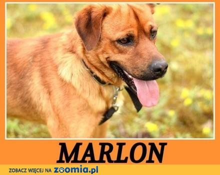 MARLON, sredni 15 kg, wesoły, chetny do zabawy psiak_Adopcja_