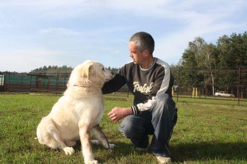 Biały  piękny pies w typie labradora do adopcji
