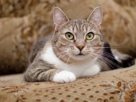 Spokojna  kochana  nieduża koteczka Mika szuka domu